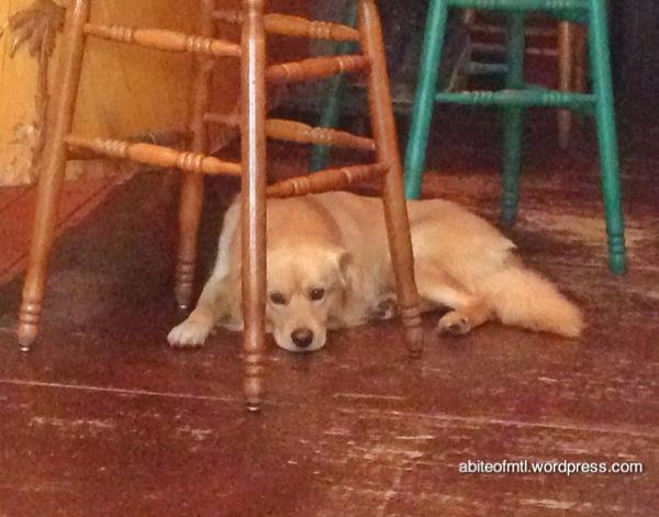 Café Aléatoire - Charlie! Probably the cutest dog ever.